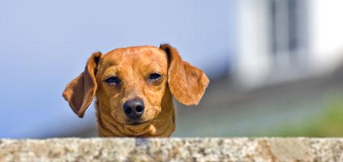 how to stop dog barking on walks
