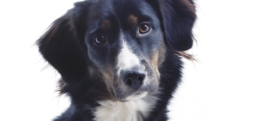 What is My Dog Trying to Tell Me? | Modern Dog magazine