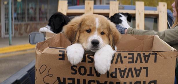 Watch Free Movie A Dogs Purpose