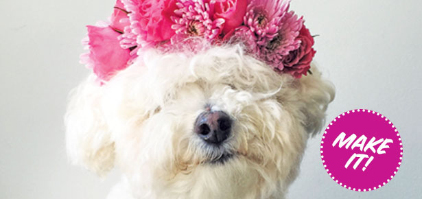 Diy Craft Make A Flower Crown For Your Dog Modern Dog