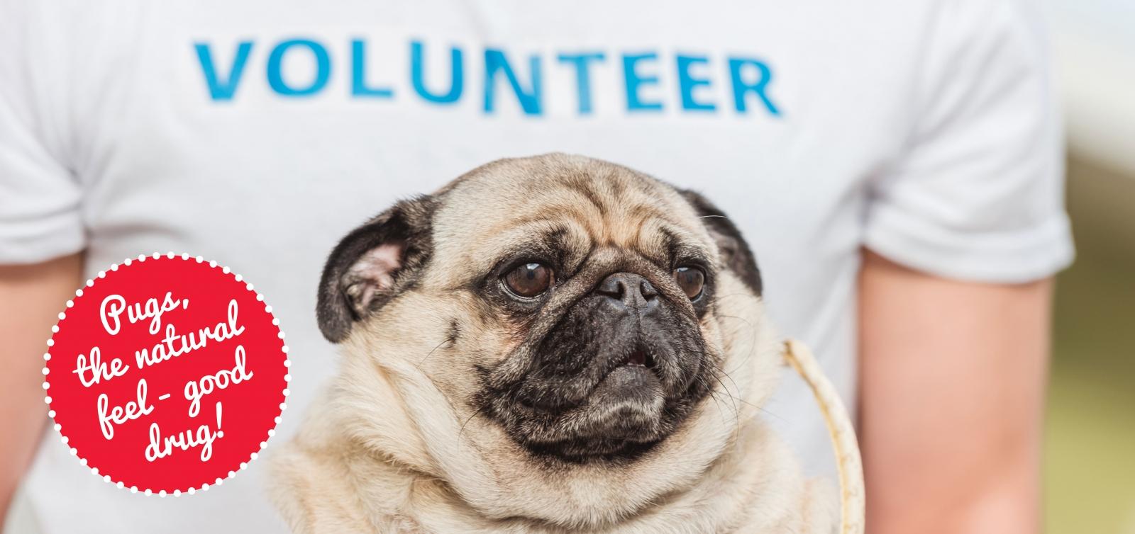 5 Fun Volunteer Ideas to Help Shelter Dogs   Modern Dog magazine