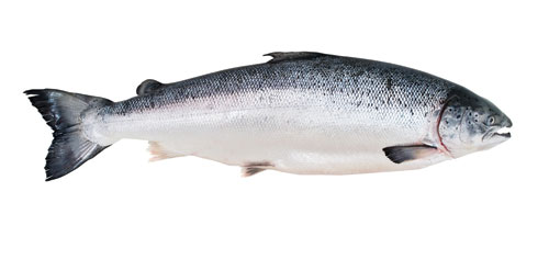 Can You Feed Dogs Tuna