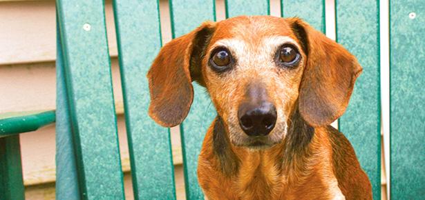 9 Ways To Help An Arthritic Dog Modern Dog Magazine