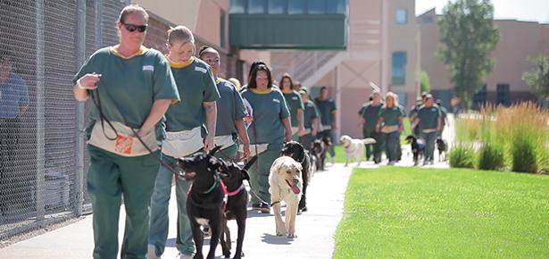 Colorado Prison Dog Training