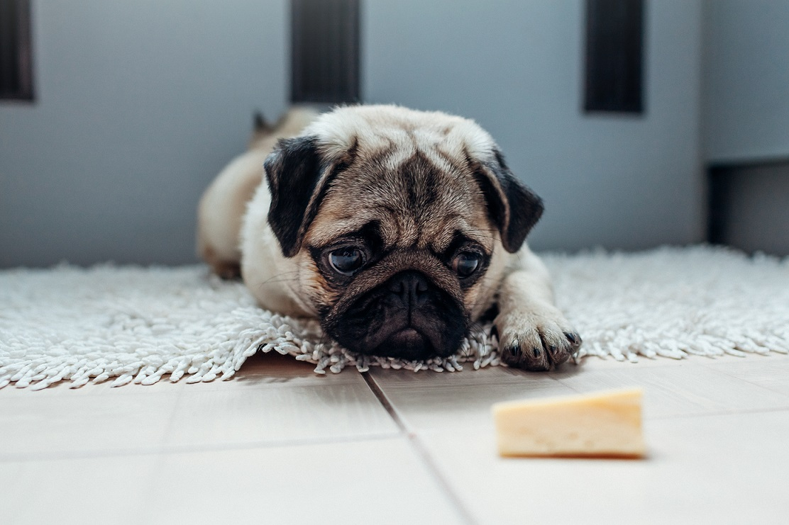 Can Dogs Eat Cheese? Yes, but Depends