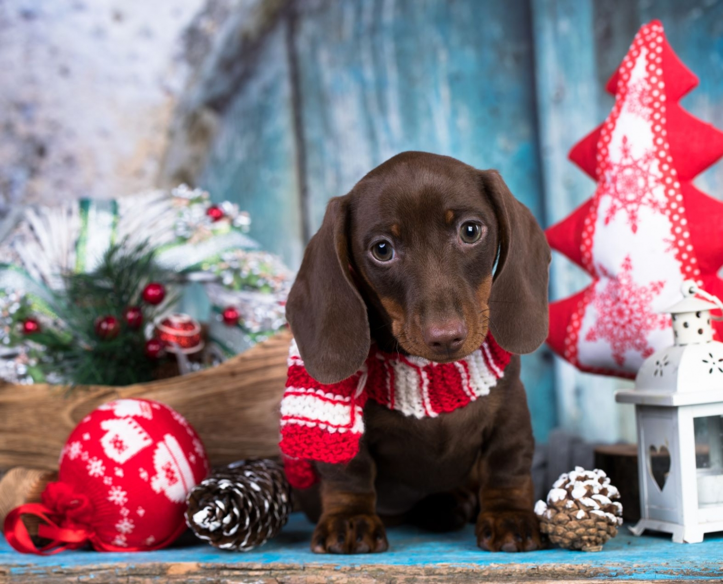 A Perfect Gift A Vet S Advice For A Christmas Puppy Present Modern Dog Magazine