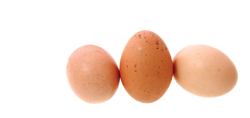 Diy Eat Eggshell Powder Modern Dog Magazine