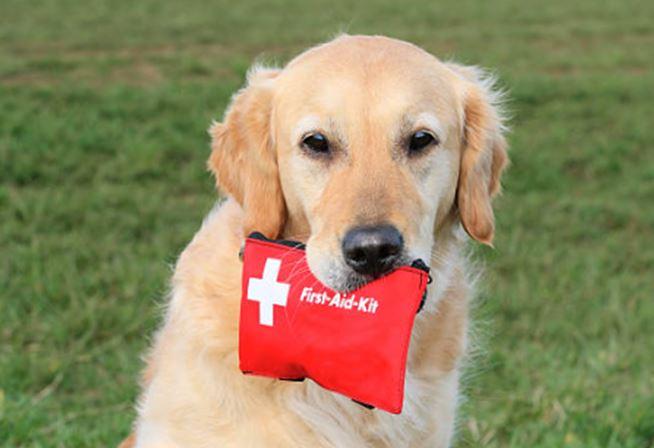 Diy Make Your Own Canine First Aid Kit Modern Dog Magazine