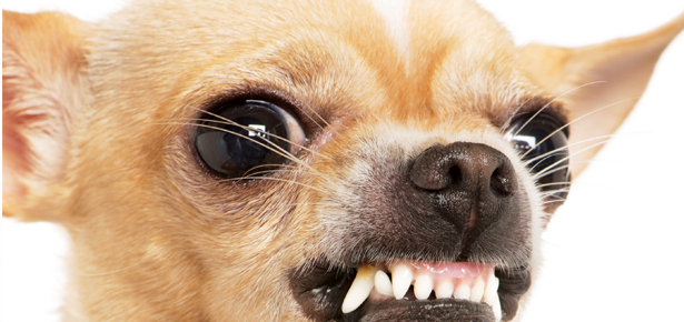 Why Growling is Good | Modern Dog magazine