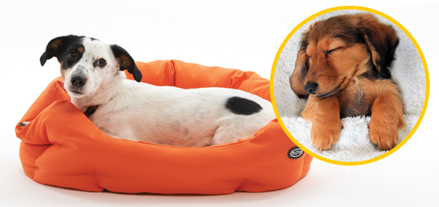 Choosing The Best Dog Bed For Your Dog