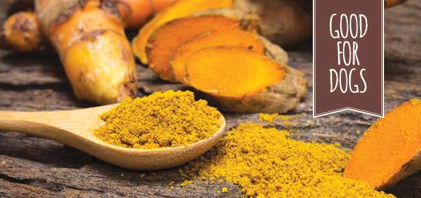 10 Reasons Why Turmeric Is Good For Dogs | Modern Dog magazine