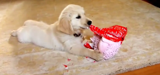 video of the day dogs opening christmas presents compilation - Christmas Presents For Dogs