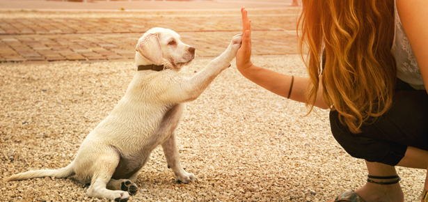 Obedience Training For Dogs | Modern Dog magazine