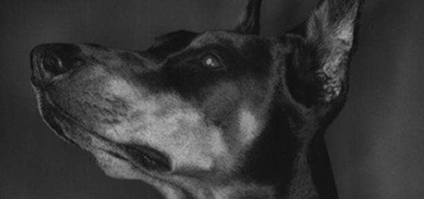 Wobbler Syndrome Modern Dog Magazine