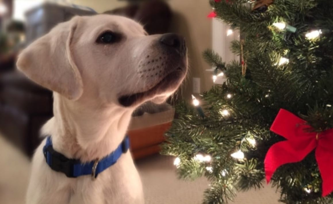 How To Keep Fido Safe Over The Holidays Modern Dog Magazine