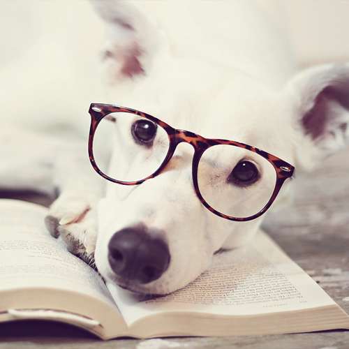 6 Studious Dogs | Modern Dog magazine
