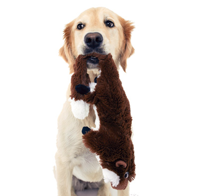 Barking Good Buys | Modern Dog magazine
