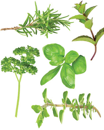 Herbs That Are Good For Dogs Modern Dog Magazine