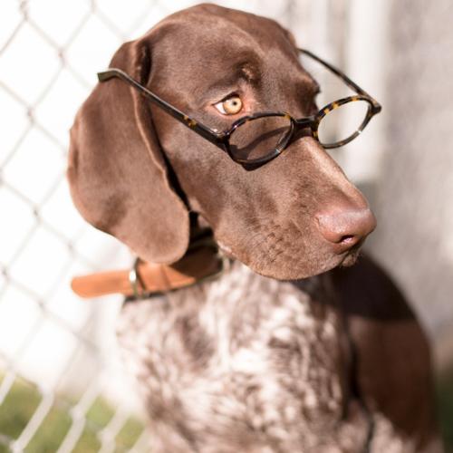 6 Studious Dogs Modern Dog Magazine