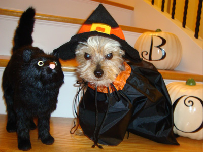 terrier and cat