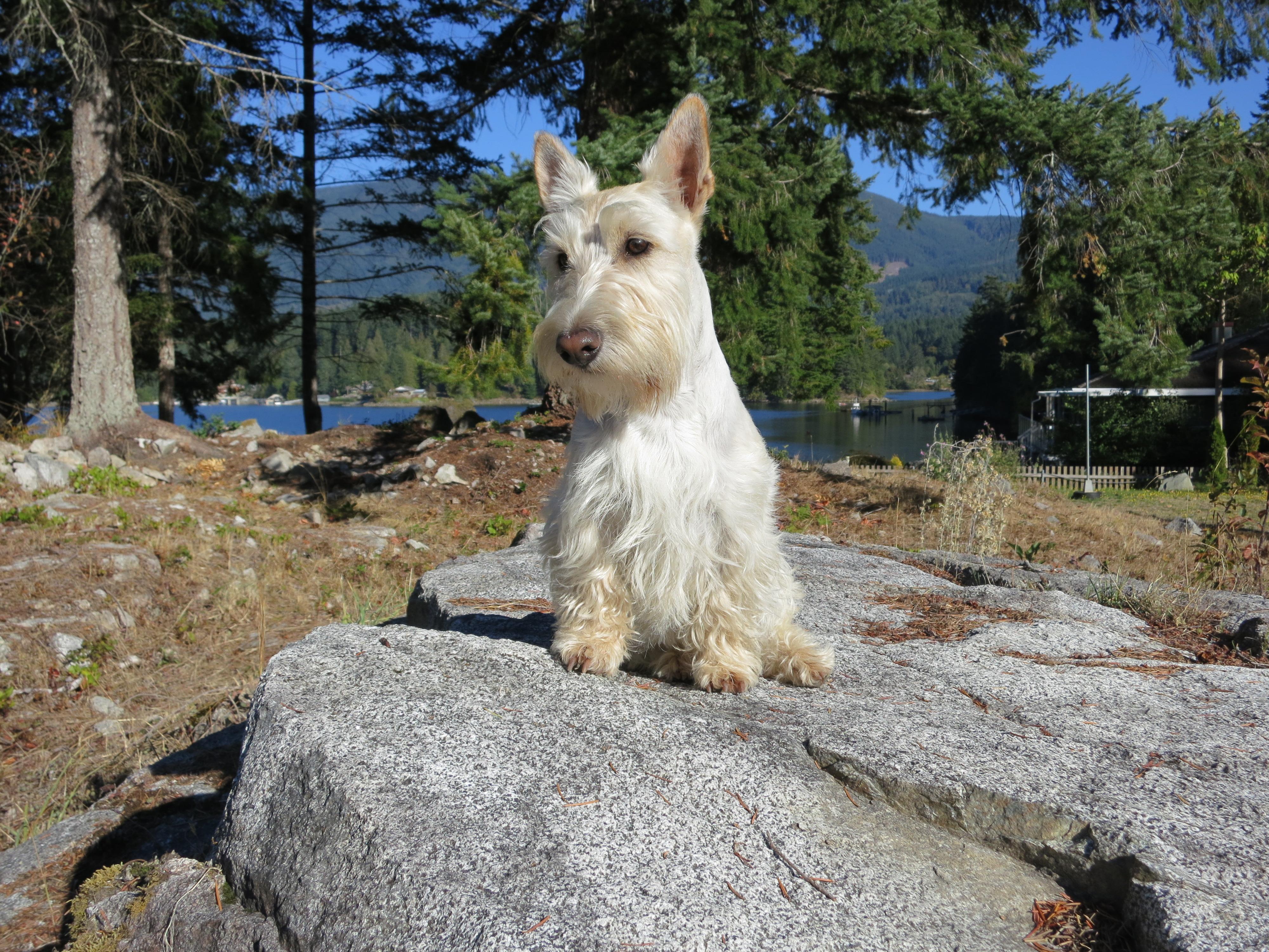 Dog Rescue Sites Victoria Bc