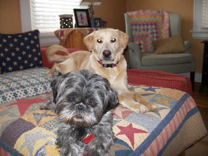 Whos Your Best Friend Dog Breed