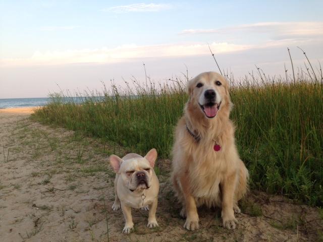 Best Dog Food Rating Sites