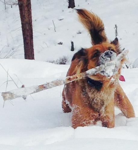 Dog Chasing Treat Contest
