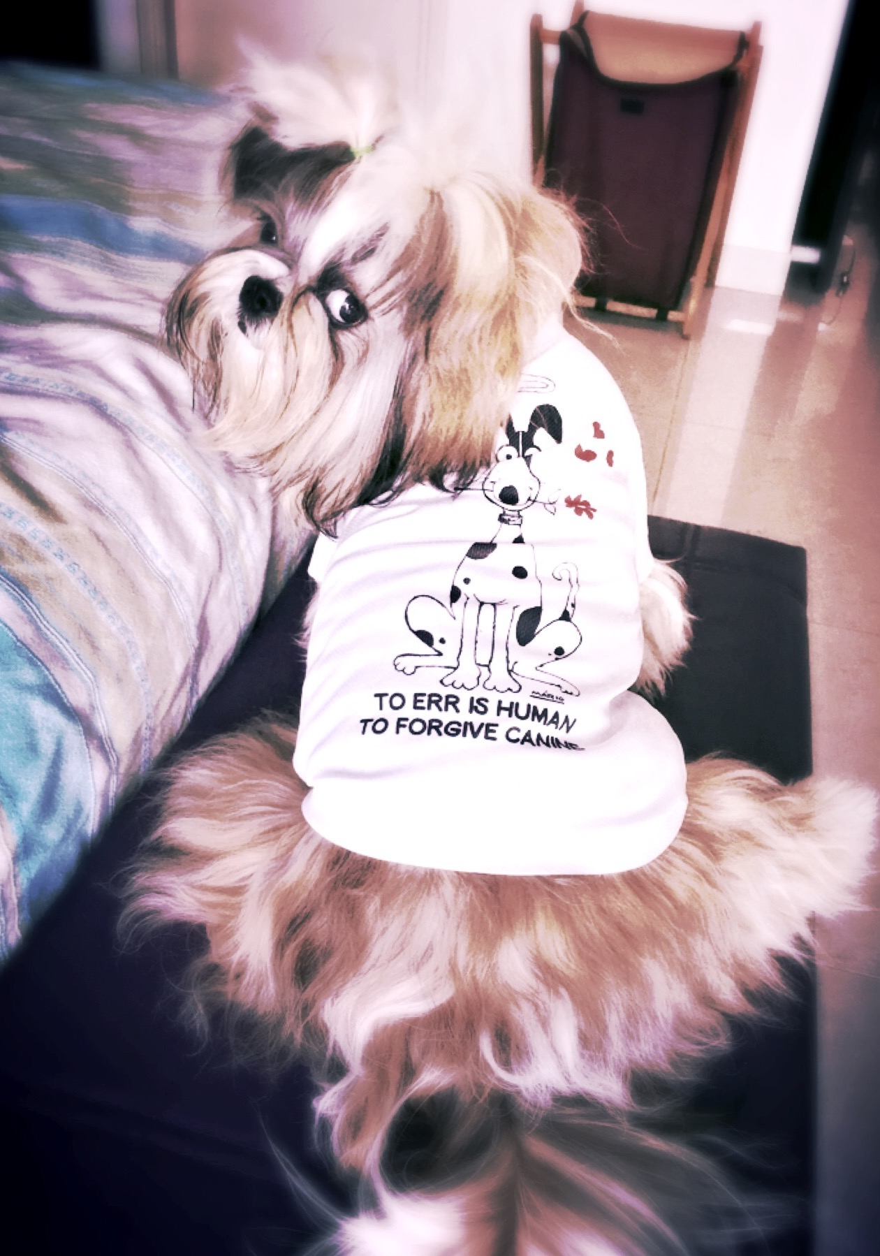 ed545b379afd Dr.Pompy wearing her favorite 'To err is human, to forgive is canine' t  shirt.