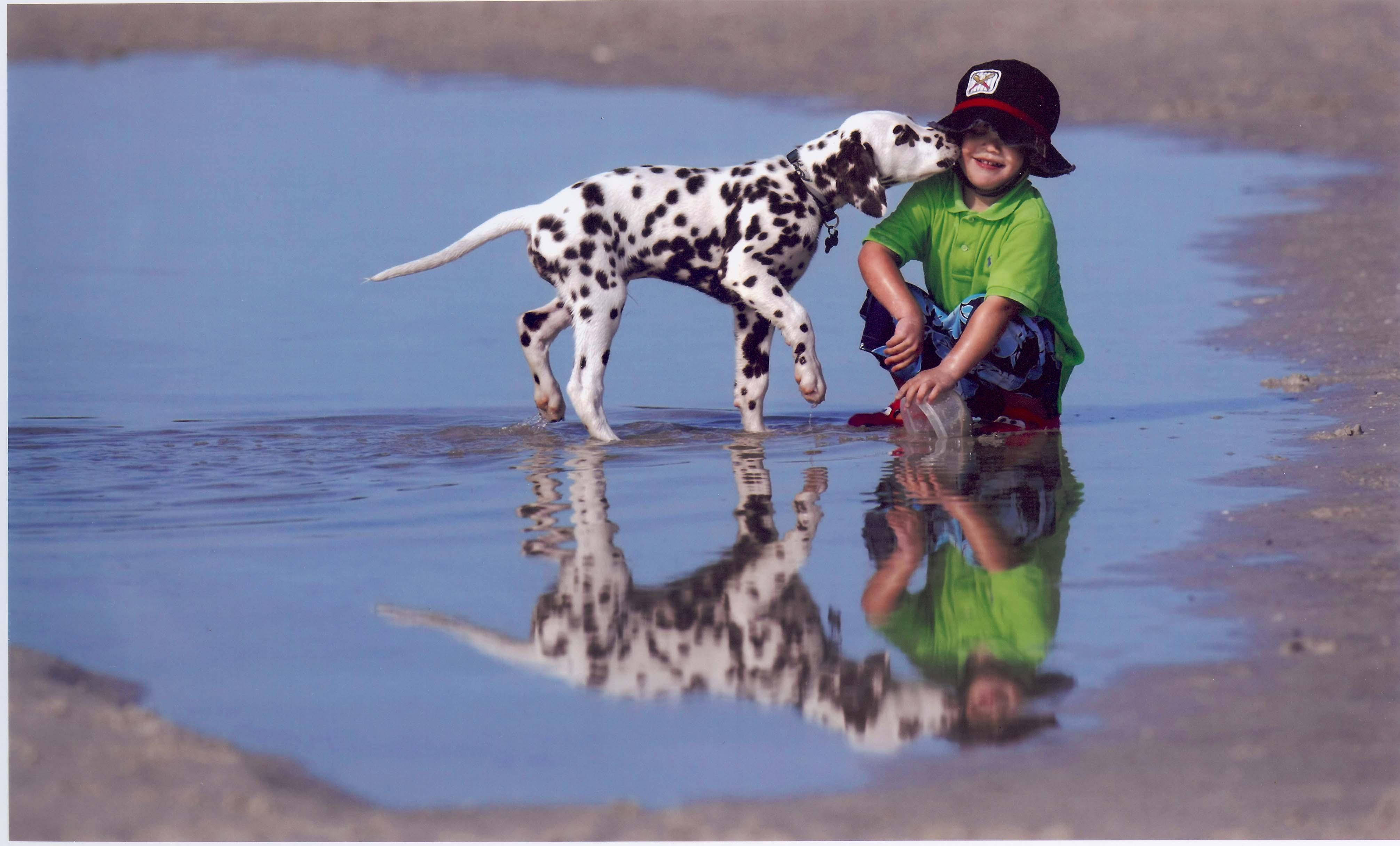 Далматинец и ребенок фото