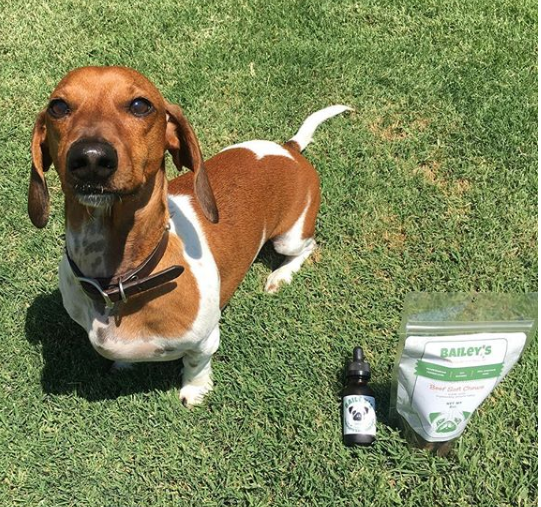 Dog with Bailey's CBD