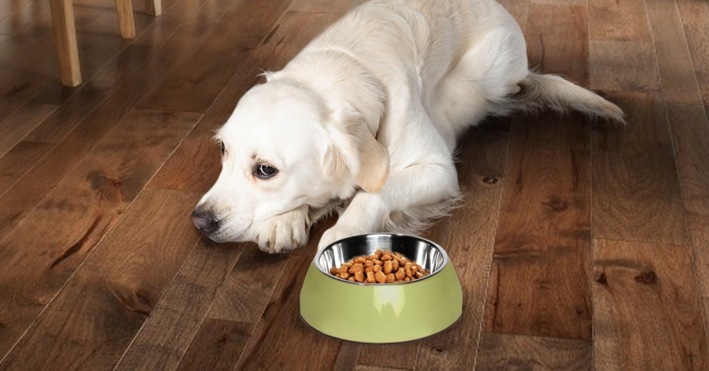 White dog with food bowl