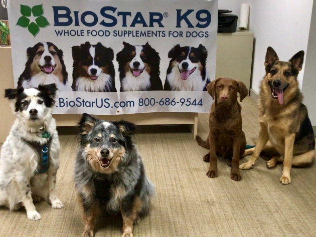 Dogs with BioStar sign