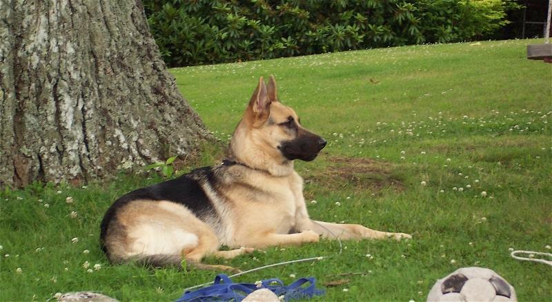 Samson the dog