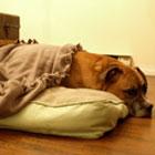 DIY no-sew pet beds