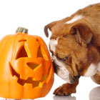 Halloween safety for your howlin' hound!