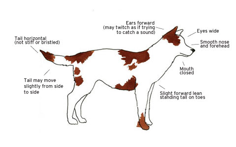Alert Dog Graph