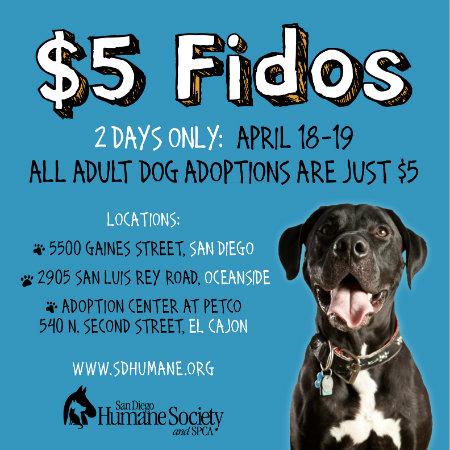 Dollar Dog Adoption