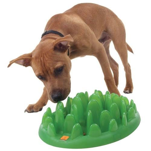 The Best Dog Bowls For Fast Eaters, Messy Eaters, and More ... - photo#7