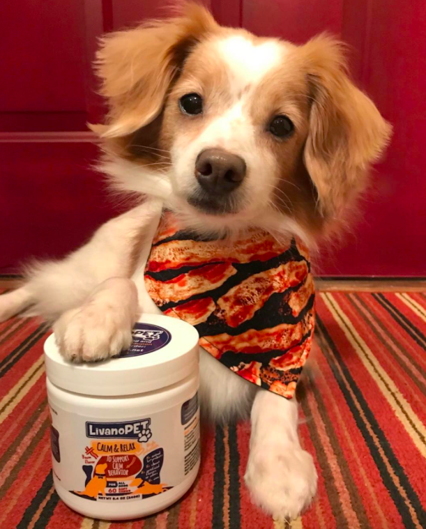 Cute dog with LivanoPET product