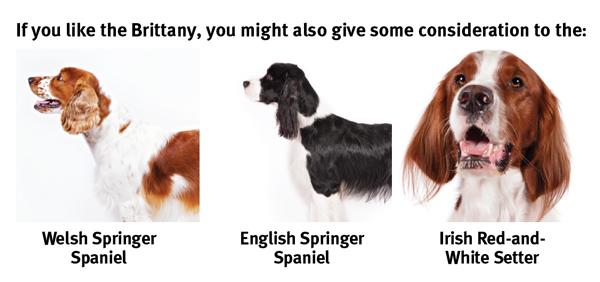 spaniel types dogs