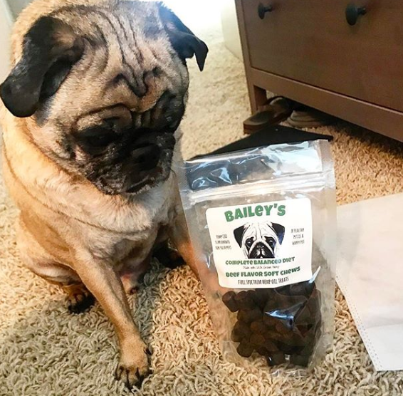Bailey with CBD treats