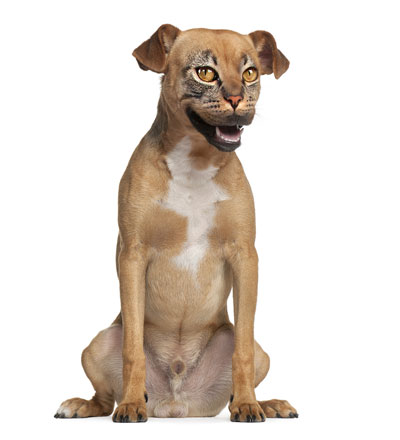 Dog and cat hybrid