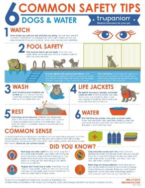Six water safety tips every dog owner should know modern dog magazine for Swimming pool health and safety rules