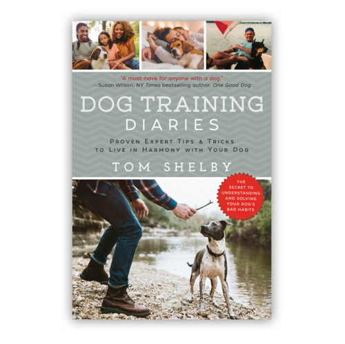 Dog Training Helps Boost Confidence