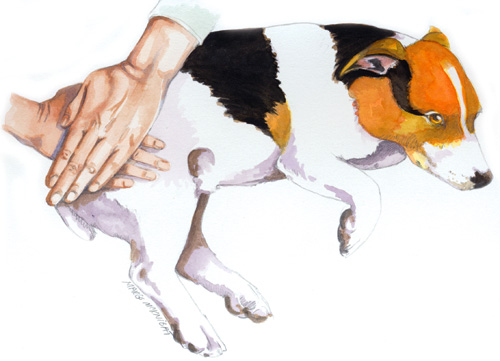 What Can You Give A Dog For Pain And Stiffness