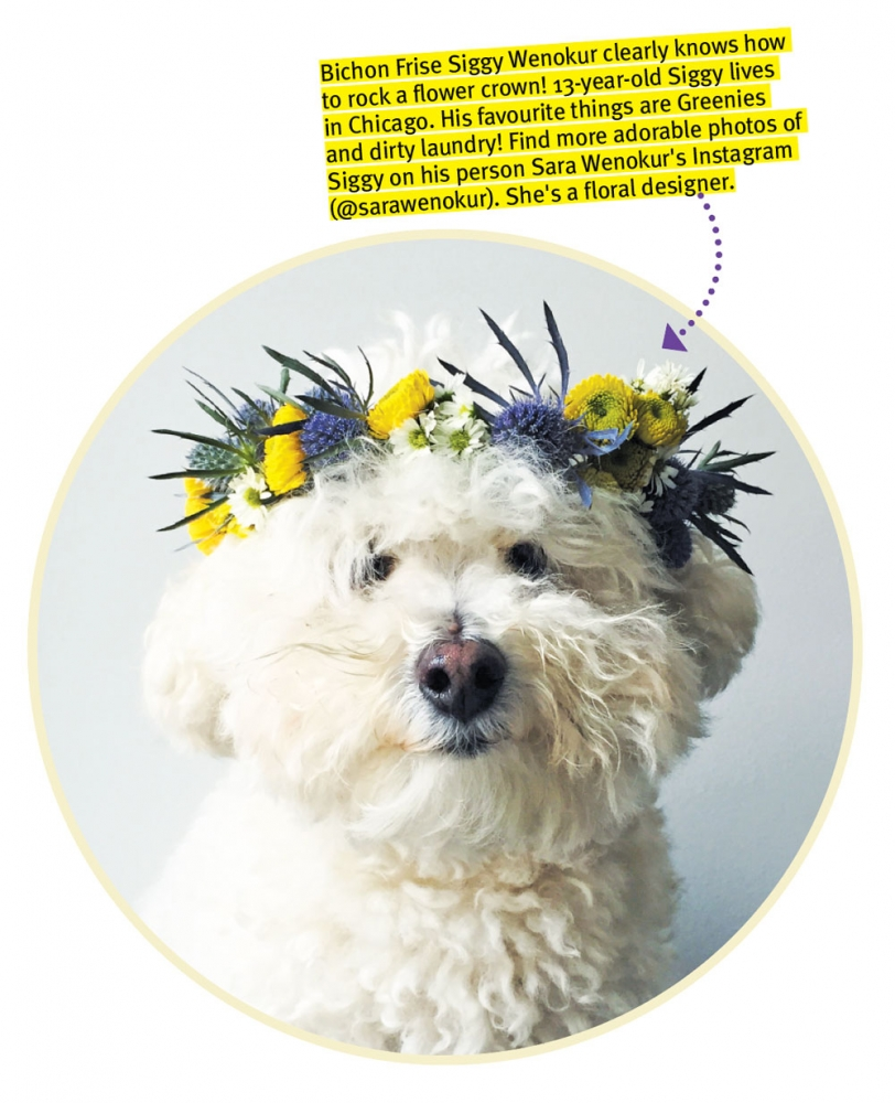 Diy Craft Make A Flower Crown For Your Dog Modern Dog Magazine