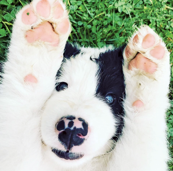 The Amazing, Mood-Elevating Properties of PUPPIES ...