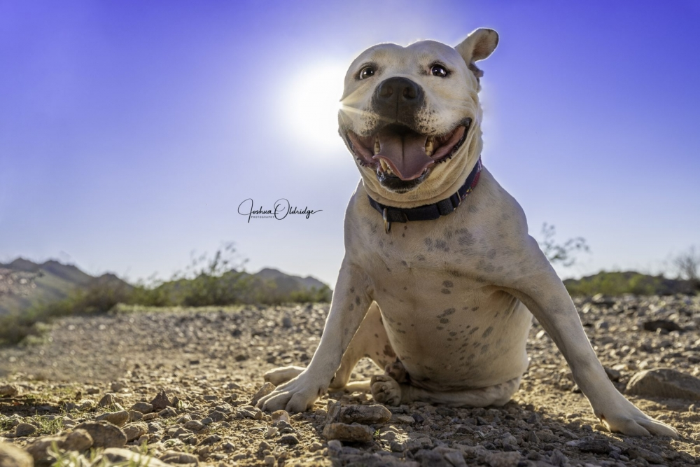 Joshua Oldridge photograph of dog in the sun