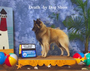 Death by Dog Show